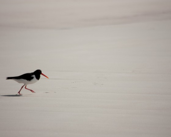 Site utile : Observer des animaux en Norvège